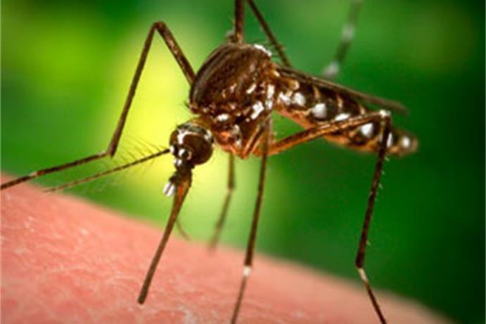 Bumper crop of mosquitoes raising West Nile Virus concerns _1113174249398422734