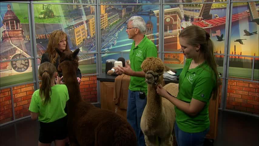Alpaca Interview