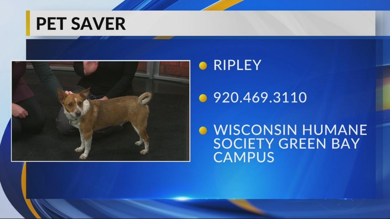Pet Saver: Ripley