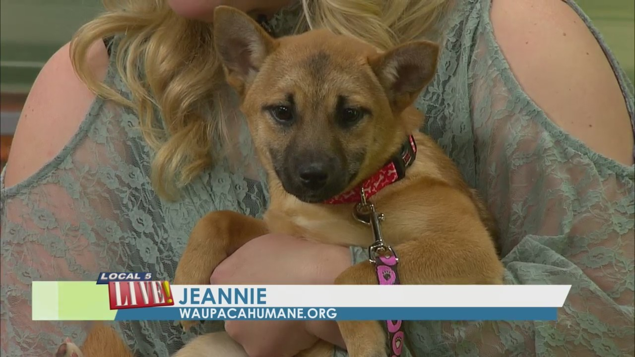 Meet Jarvis and Jeannie from the Waupaca Humane Society