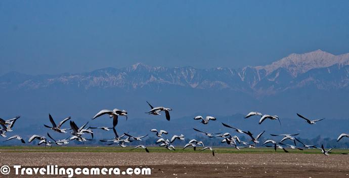 Wetland-Himachal-migratory-birds-in-pong-dam