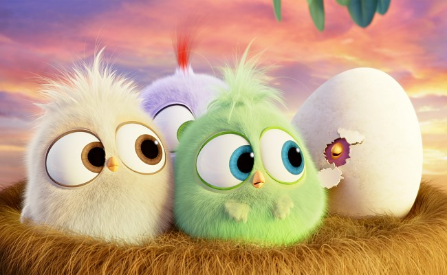 The Adorable Hatchlings From The Angry Birds Movie Wish