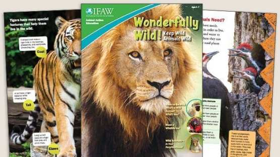 Grades K-2: Keep Wild Animals Wild - Student Magazine