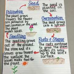 Parts Of A Flowering Plant Diagram 1995 Ford Taurus Wiring 13 Creative Ways To Teach Life Cycle - Weareteachers