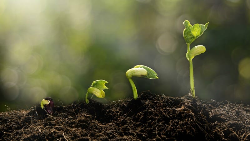 13 Creative Ways To Teach Plant Life Cycle Weareteachers