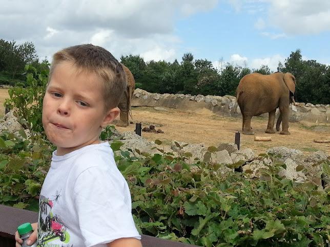 Colchester Zoo Trip