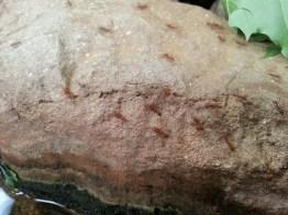 ants-close-up
