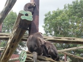 huddled-monkeys