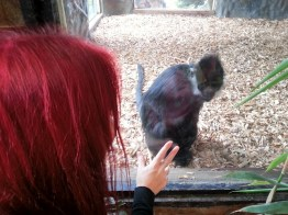 mummy-monkey