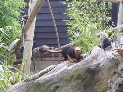 various-monkeys