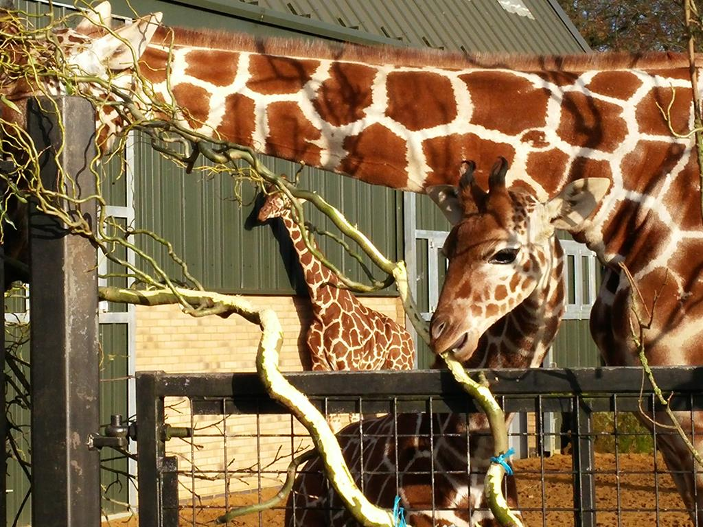 ZSL Whipsnade Zoo – Daizee-Mai's Pre-Birthday Trip