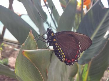 butterfly-world0044