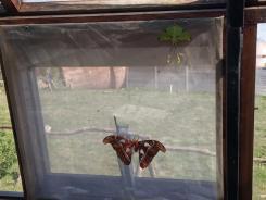 butterfly-world0095
