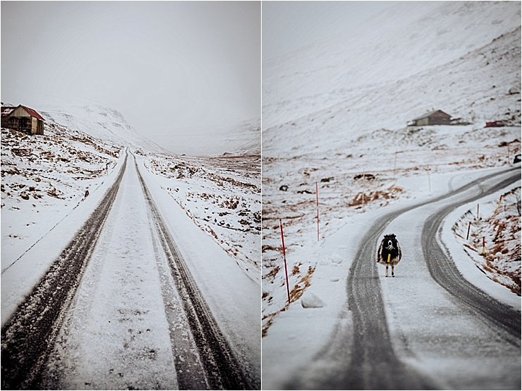 Winter in the Faroe Islands and a sheep stands in the centre of the snow covered road by We Are The Wanderers
