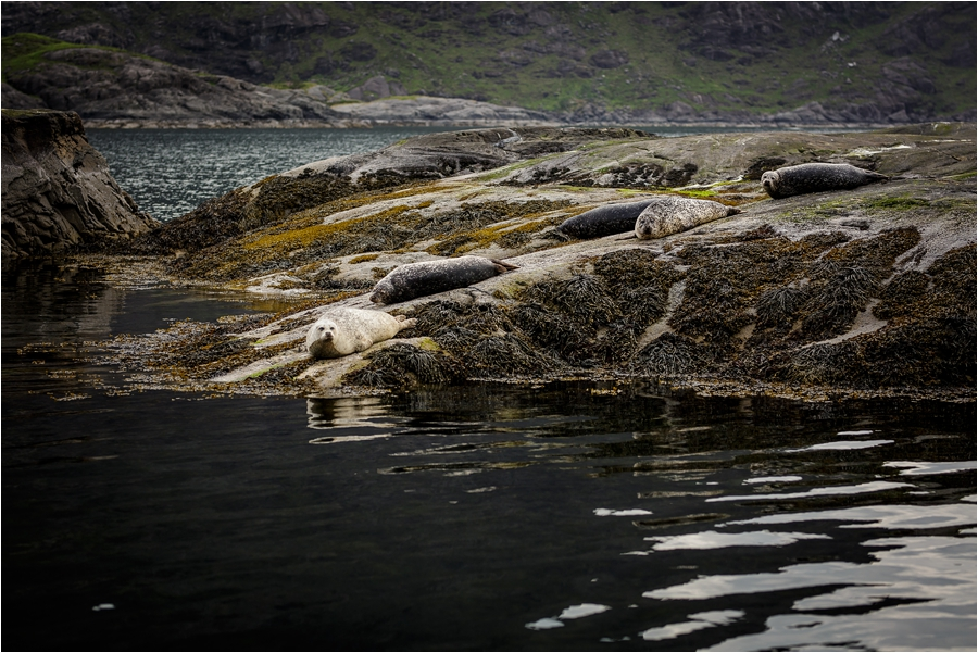 The couple pass seals on a beach on the way to their Loch Coruisk Elopement On The Isle Of Skye by Lynne Kennedy Photography