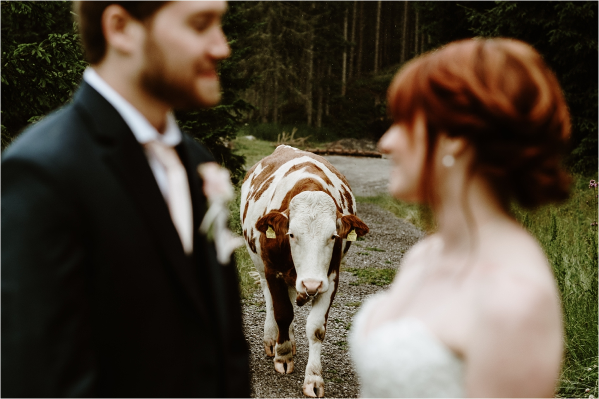 A mountain wedding in Austria with cows. Photos by Wild Connections Photography