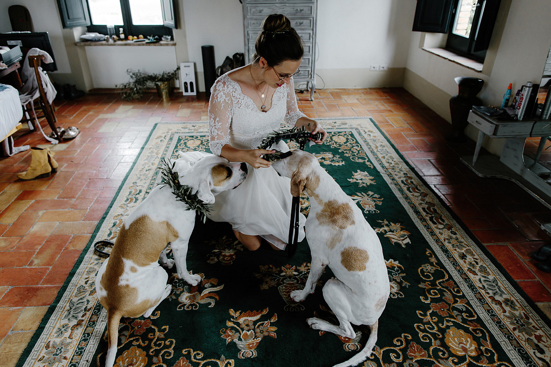 Bride dressing her dogs for a wedding