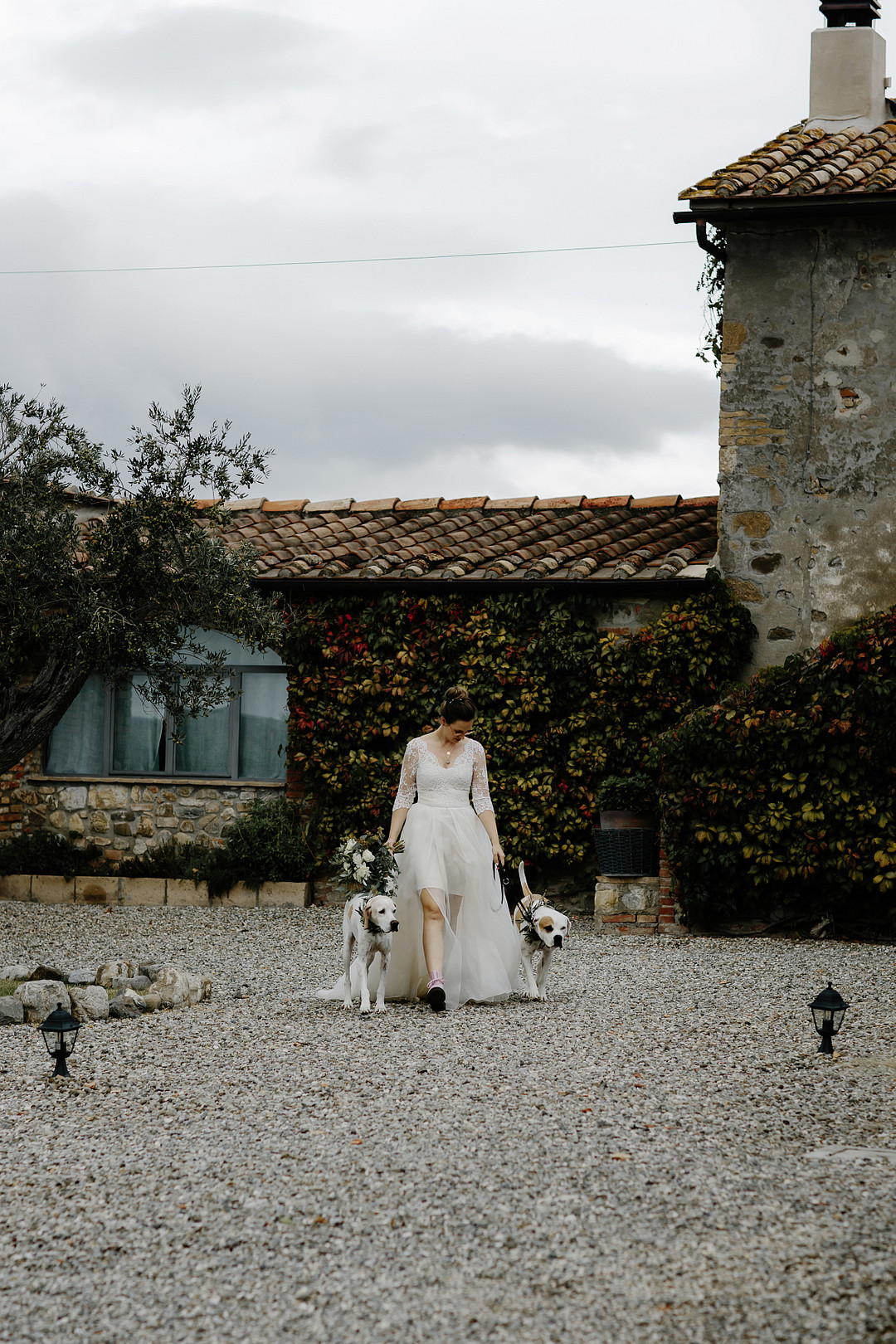 Bride walking to the ceremony with dogs