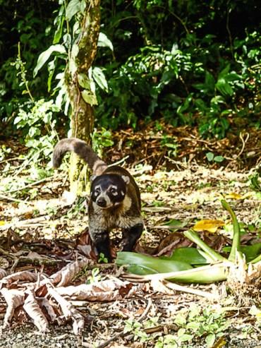 4. Arenal - cerro chato (neusbeertje)