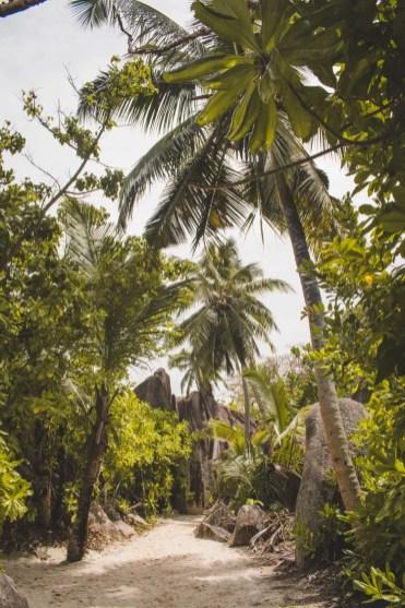 Anse Source d'Argent palmbomen weg