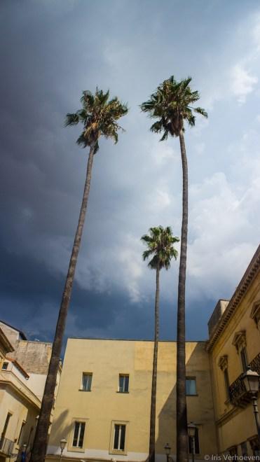 Bari-italie-palmbomen