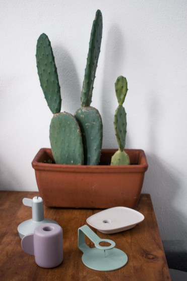 Bohemian interieur cactus