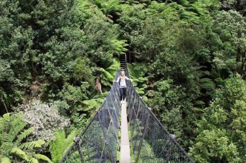 Fleur Regenwoud in tasmanie australie