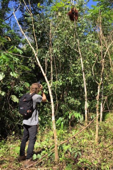 Foto maken Orang-Oetan in Bukit Lawang
