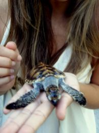 Gili Nanggu schildpadden