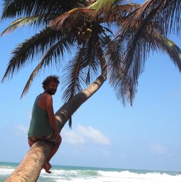 Hikkaduwa sri lanka palmbomen strand