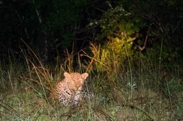 Hluhluwe zuid afrika luipaard spotten