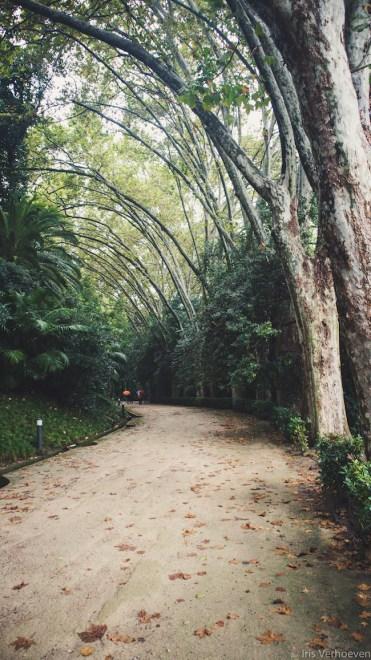 Malaga-botanic-garden