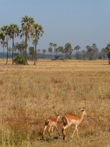 Malawi zon