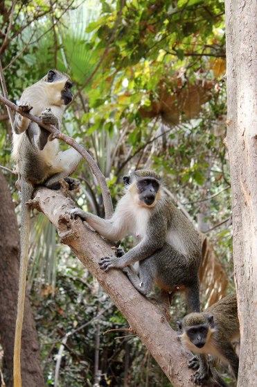 Monkey-Park-6