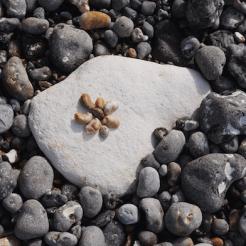 Normandie schelpen zoeken