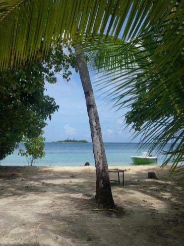 Palmboom malediven backpacken strandje