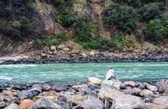 Rishikesh rivier india