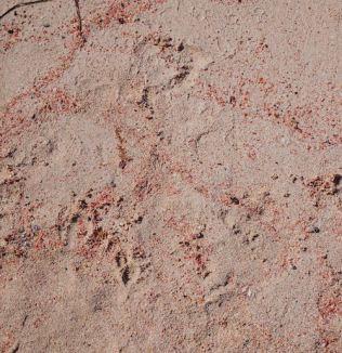 Roze zand op Kreta