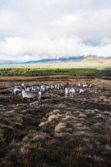 Schotland Cairngorms