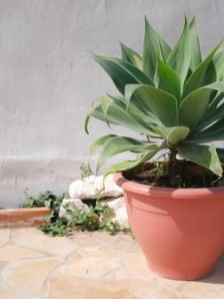 Sicilie zon tuin