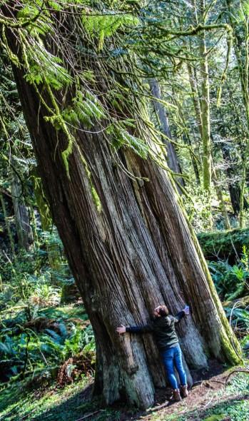 Vancouver island bomen 10.52.38