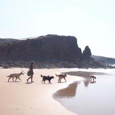 Vrijheid camper reis strand