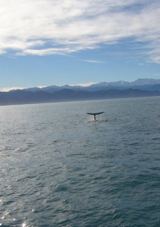 Walvissen NieuwZeeland spotten