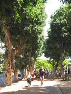 Wat te doen in Tel Aviv Rothschild-3