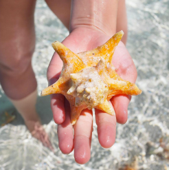 bahamas schelpen zee exumas