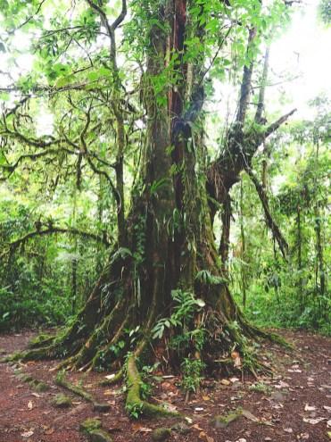 bomen Catarata del Toro costa rica