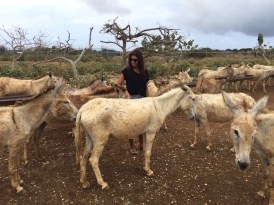 bonaire-donkey-sancturary-5