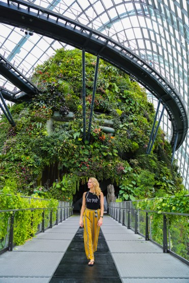 cloud forest singapore