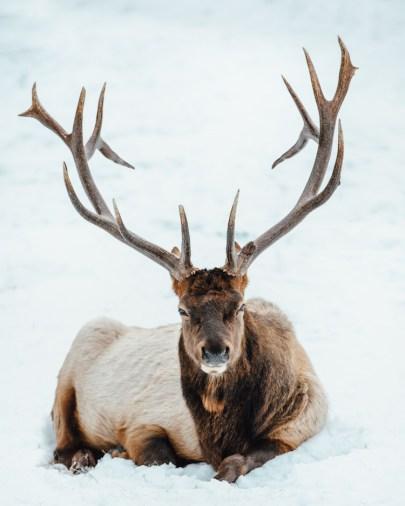 eland winter canada