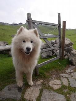 hond slovenie kamnik